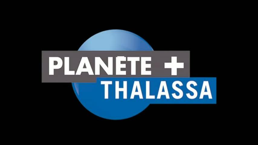 Clip Club de l'Année 2011 - CVSAE - P Thalassa