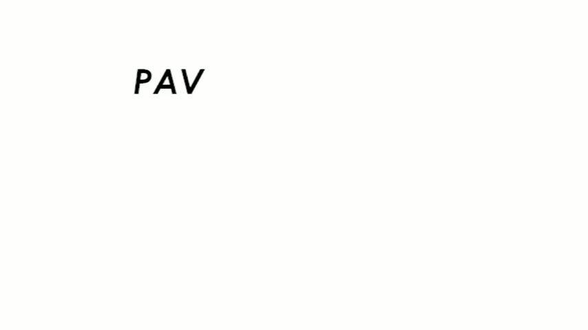 PAV293VirMol2