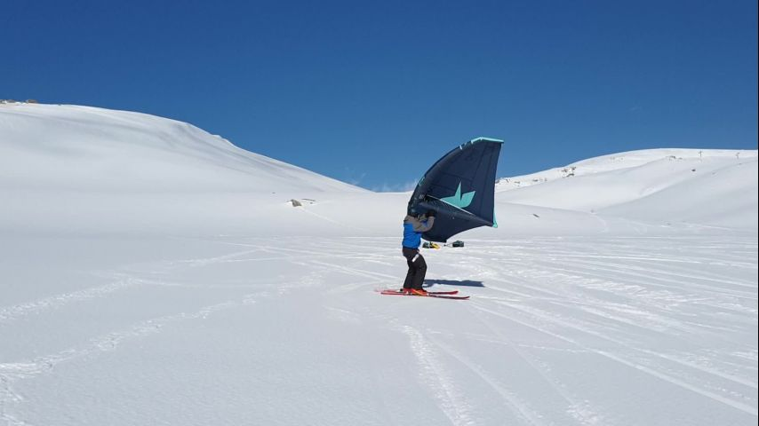 Snowwing